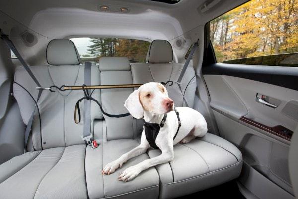 Kurgo Hundegurt Auto, Sicherheitsgurt Hunde, Anschnallgurt Hund Auto, Hundegurt fürs Auto